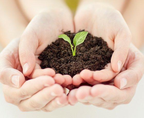 altruista medio ambiente