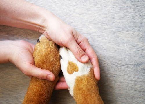 Amistad hombre-animal