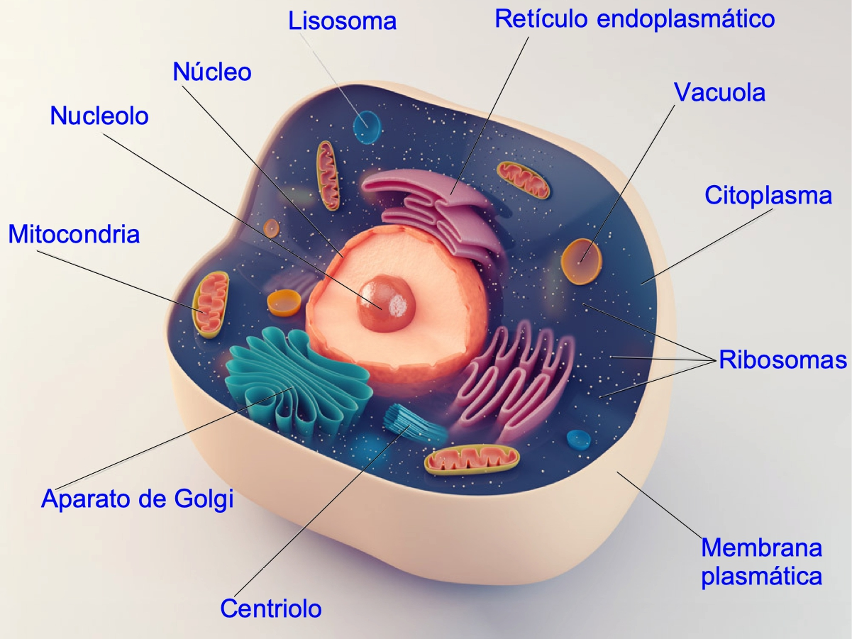 Célula eucariota. Partes