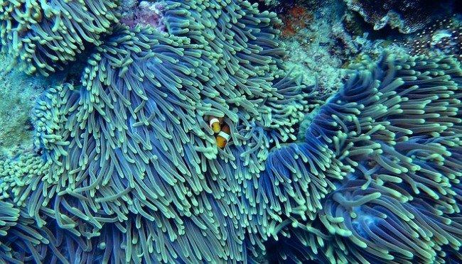 Animales invertebrados, corales