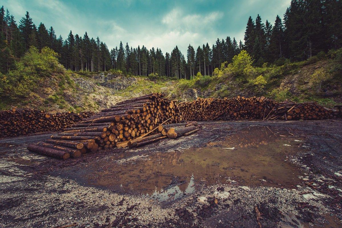 Contaminación ambiental-deforestación
