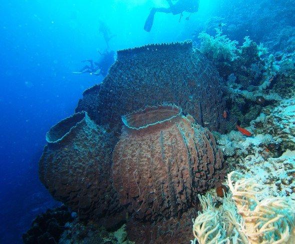 Animales invertebrados, esponjas de mar