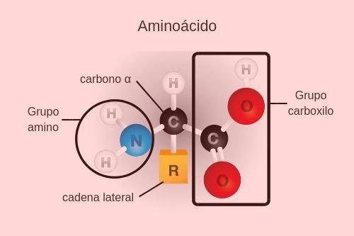 estructura aminoácido
