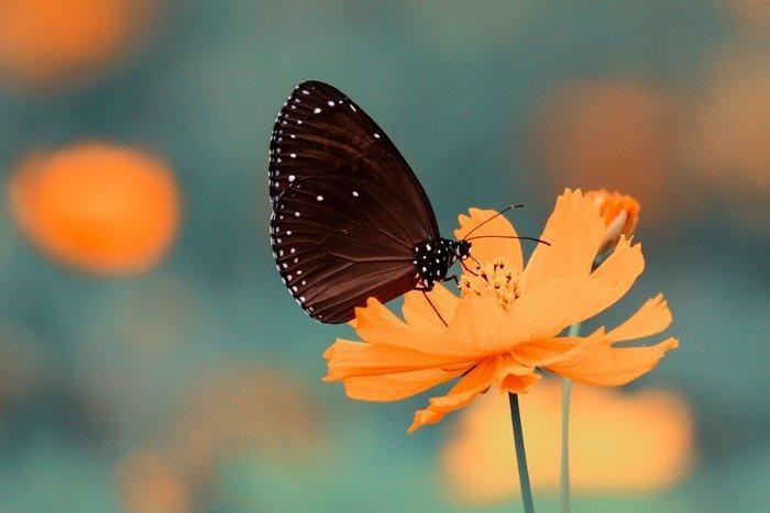 Flor, polinización