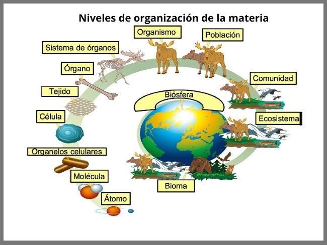 Niveles De Organización De La Materia Qué Son Cuáles Son Y Ejemplos Significados