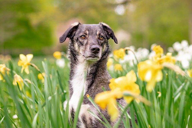 perro rodeado de flores amarillas