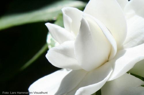 El incre ble significado de las 15 flores m s bellas del for Tipos de arboles y su significado