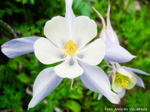El Increible Significado De Las 15 Flores Mas Bellas Del Mundo
