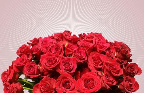 Rosas-San Valentín