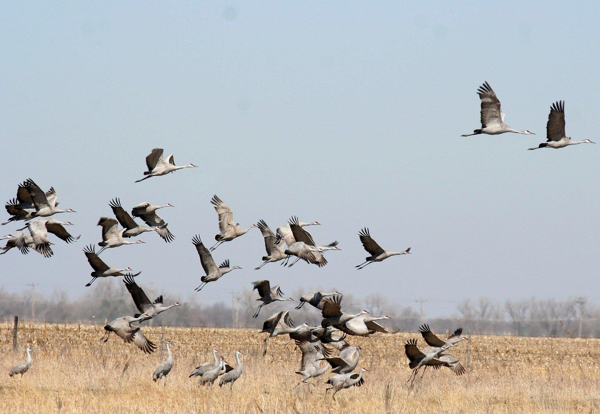 Fenómenosnaturales. Migraciones animales