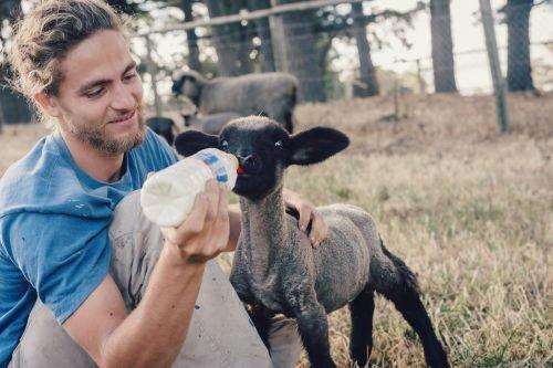 Solidaridad-animales