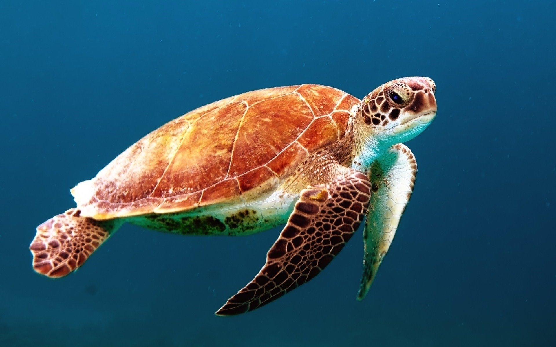 Animales acuáticos, tortuga marina