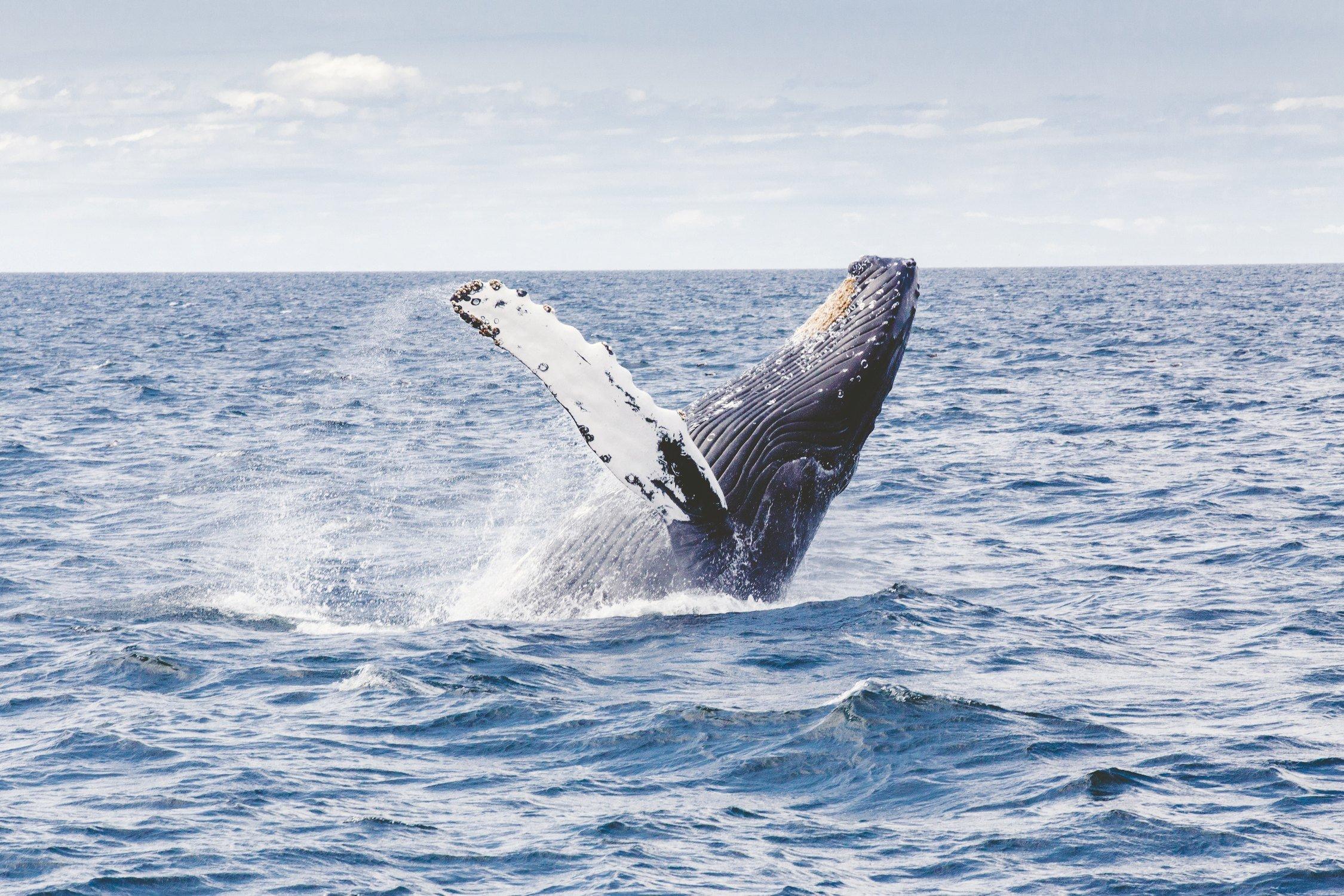 Animales acuáticos, ballena